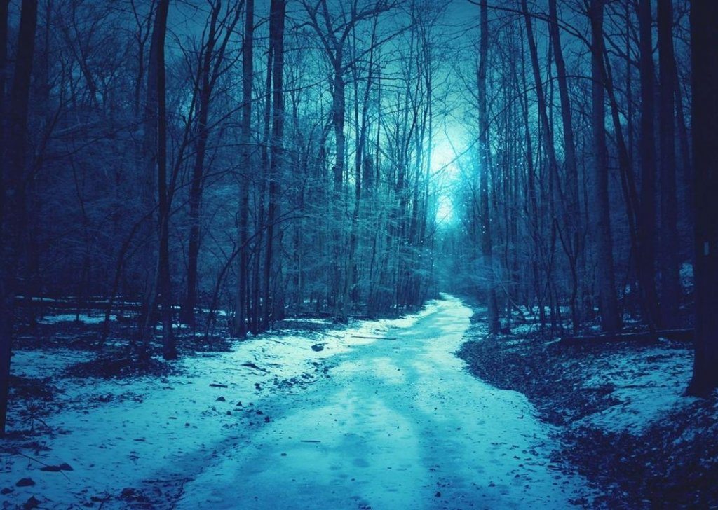 strange enticing sounds from the dark winter forest audio atmosphere