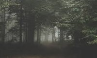 Horror Forest